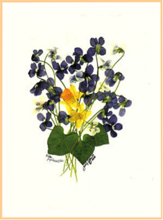 """The image depicts a pressed bouquet comprises of the flowers that were listed in Margaret's bouquet for Bessy. The purple """"dog violets"""" (wild violets) and yellow """"lesser celandines"""" form a tiny yet colorful arrangement."""